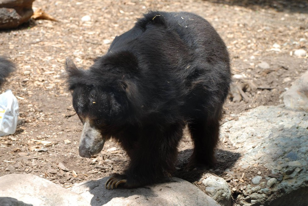 oso-deprimido3