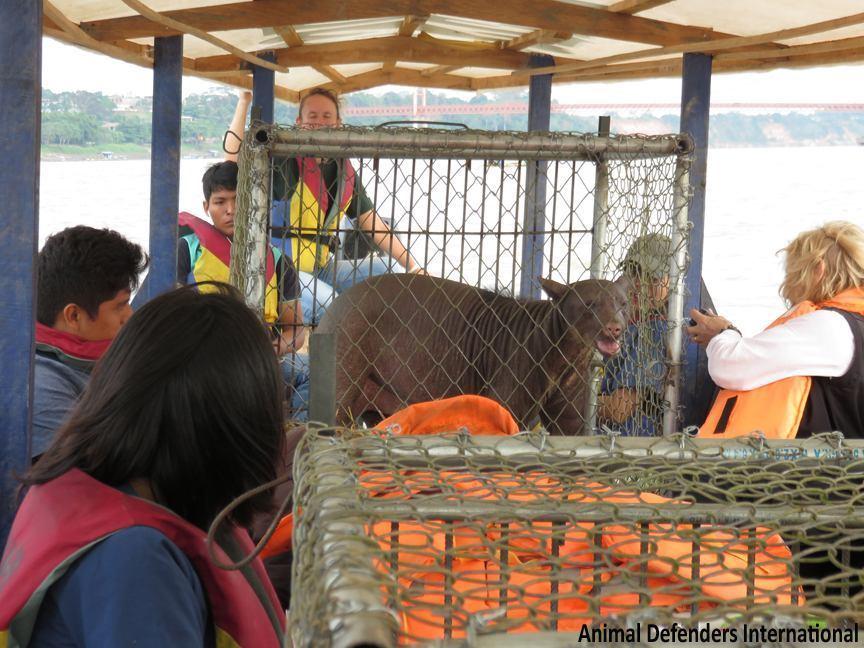 oso-liberado-circo9
