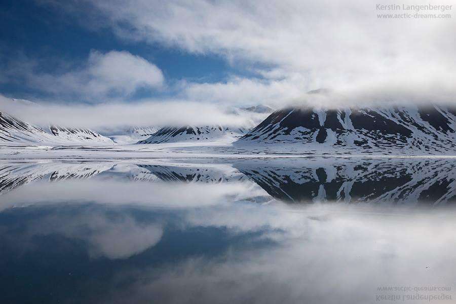 osos-polares-artico