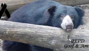 osos-zoo-eutanasia
