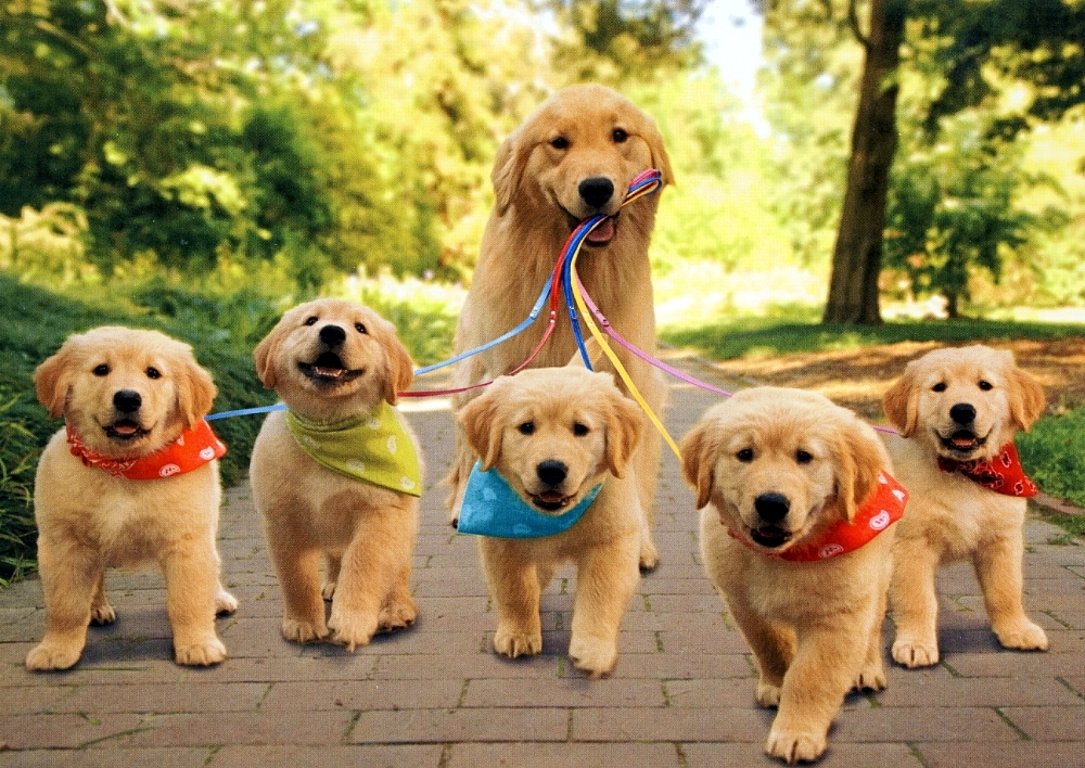 http://www.zoorprendente.com/wp-content/uploads/2015/09/perro-cachorros.jpg