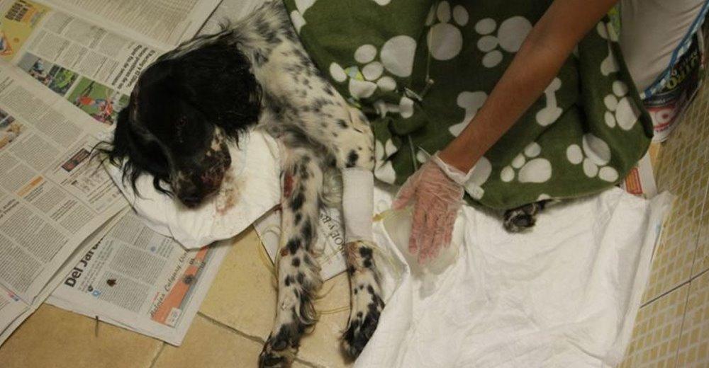 perro-cruelmente-golpeada
