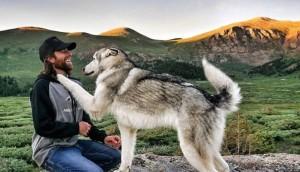 perro lobo loki 23