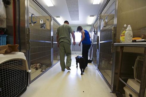 perro-rescatado-peleas2