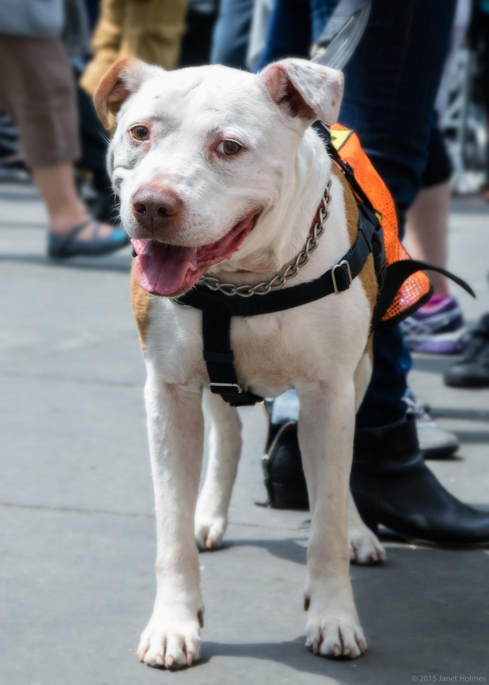 perro-rescatado2