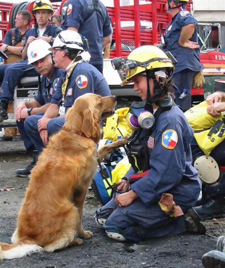 perro-rescatista-11-09-