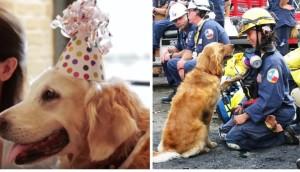 perro-rescatista-victimas-11-09