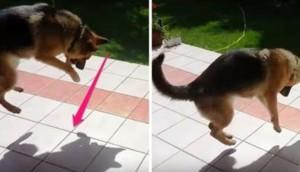 perro-sombra-jugando