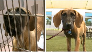perros-rescatados-corea-comercio