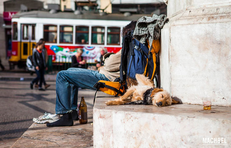 portugal-prohibe-mascotas -