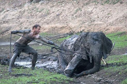 rescate-elefante1