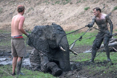 rescate-elefante10