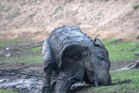 rescate-elefante13