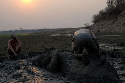 rescate-elefante8