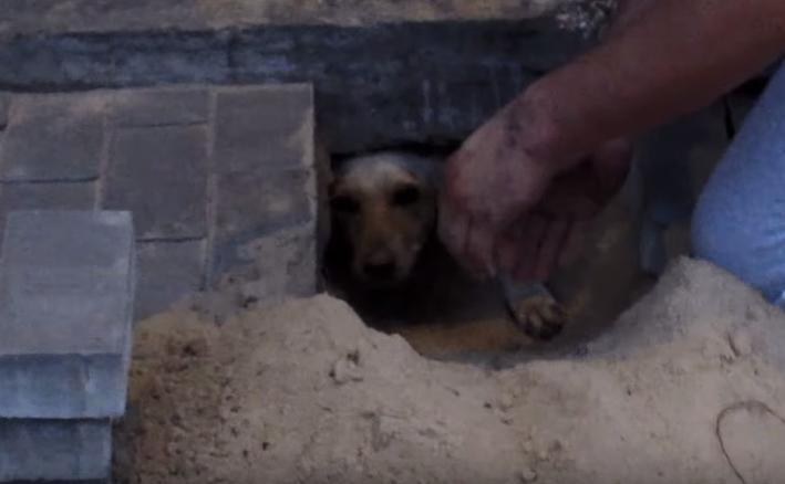 rescate-perro3