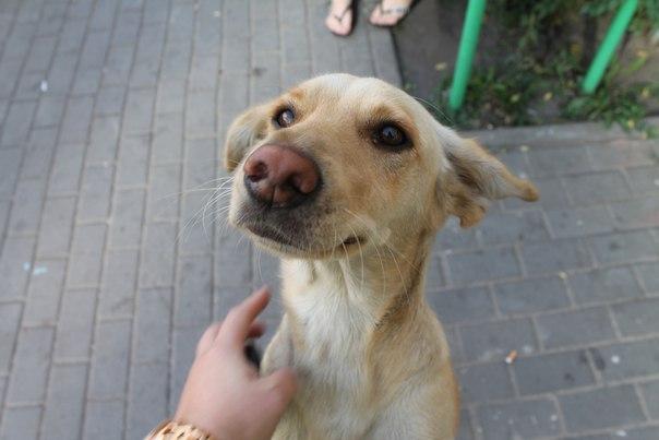 rescate-perro4