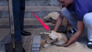 rescate-perro8- - copia