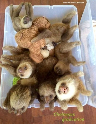 animales y peluches 15