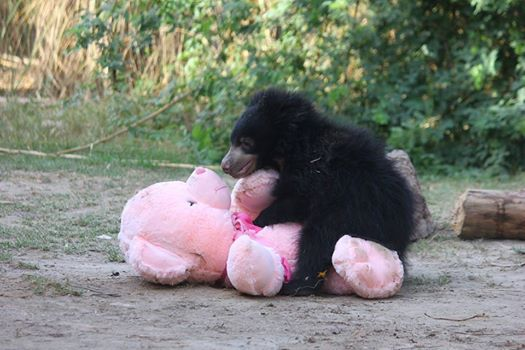 animales y peluches 6