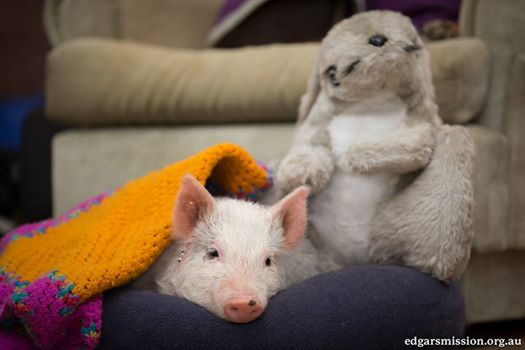 animales y peluches 7
