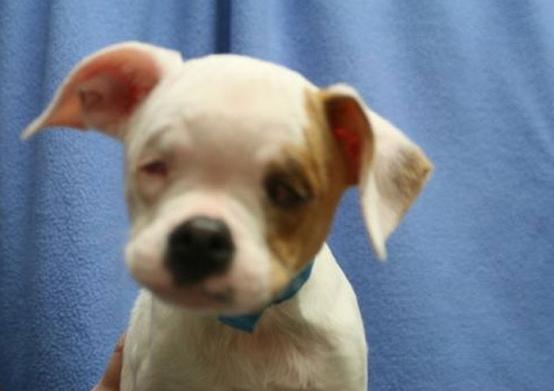 cachorro-sordo-ciego1