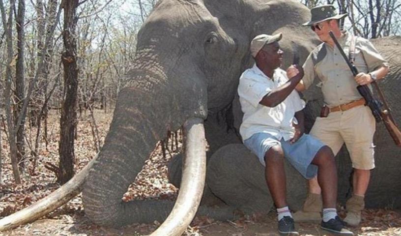 cazador-paga-para-cazar-a-elefante