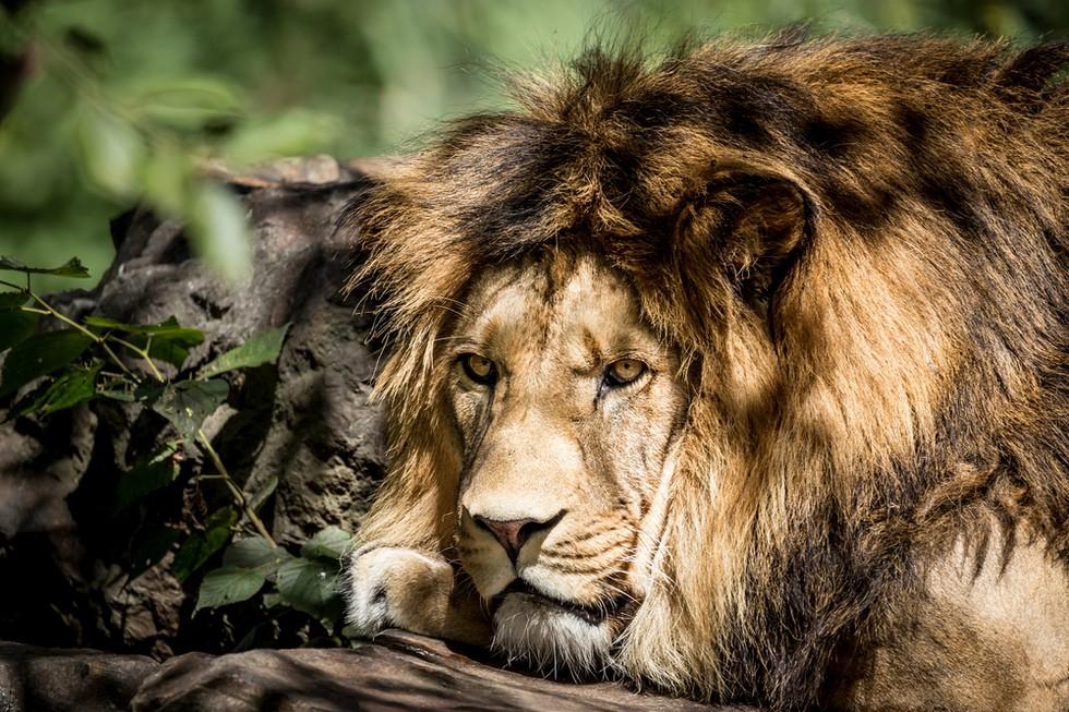 cazadores-dicen-que-ayudan-a-los-animales1