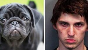 condena-matar-a-perros1 - copia