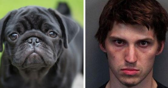 condena-matar-a-perros1