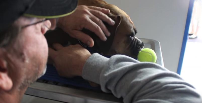 cortometraje-rescate-perritos17