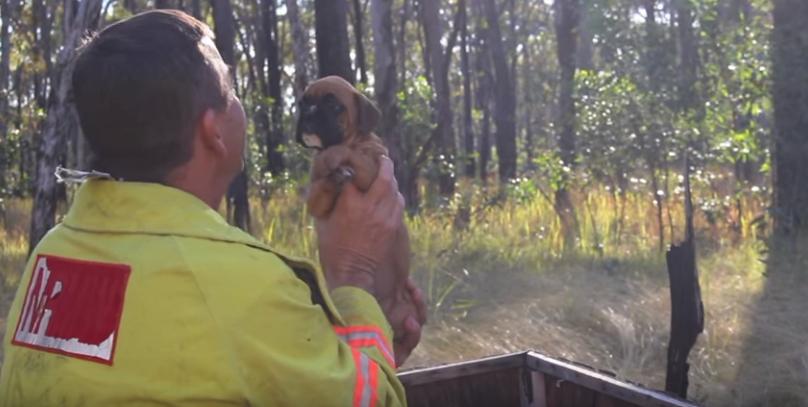 cortometraje-rescate-perritos2 - copia