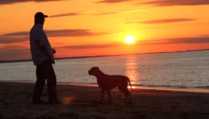 cortometraje-rescate-perritos20 - copia