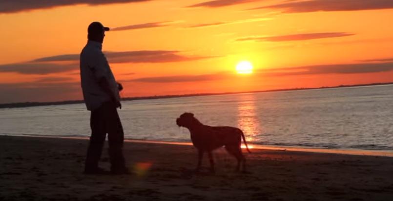 cortometraje-rescate-perritos20