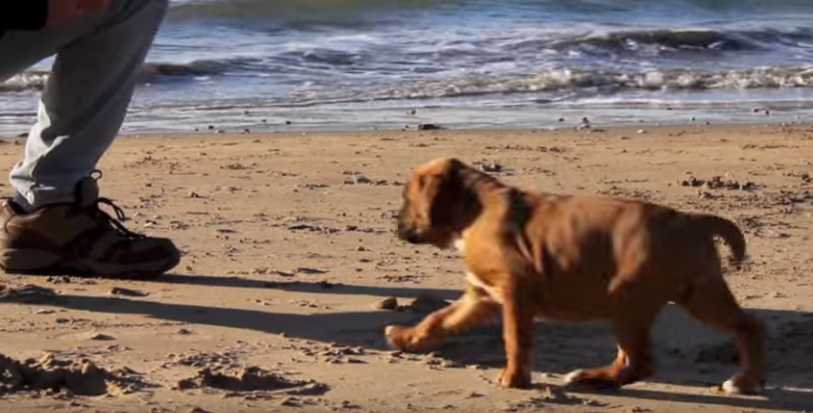 cortometraje-rescate-perritos5