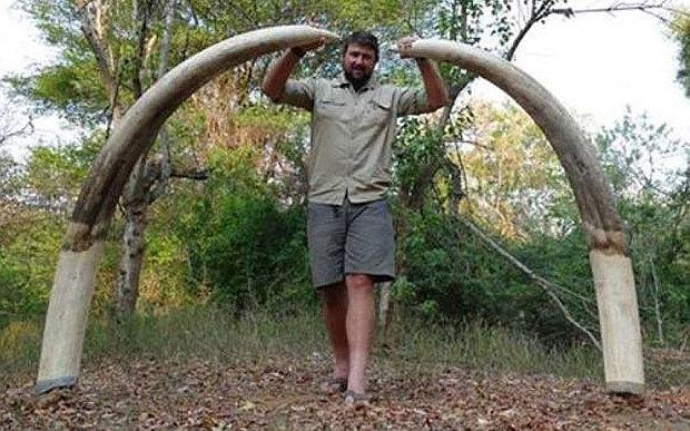 elefante-cazado-zimbabue