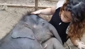 elefante durmiendo