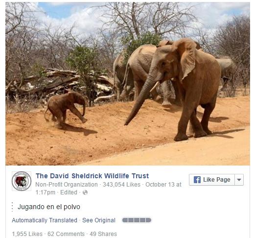 elefante-presenta-a-bebe1