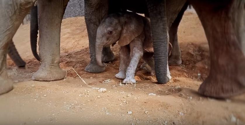 elefante-presenta-a-bebe5