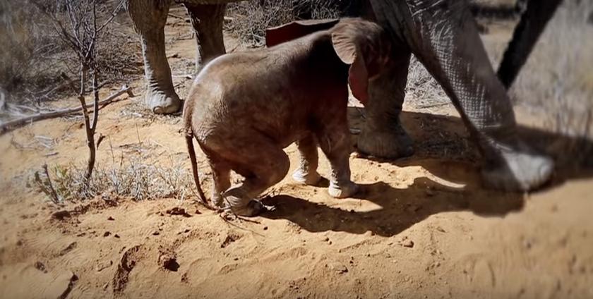 elefante-presenta-a-bebe7