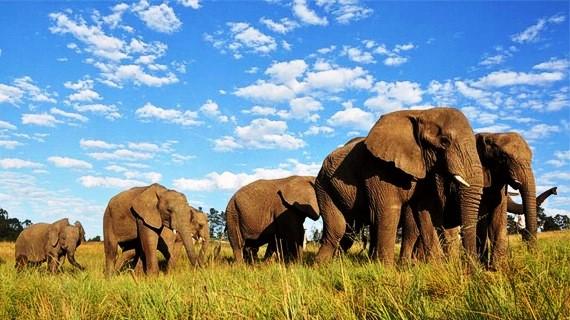 elefantes-tratamiento-cancer-celulas