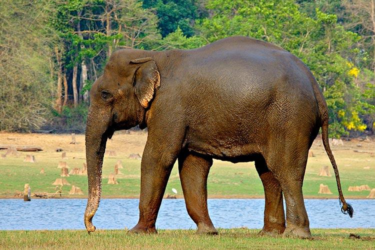 elefantes-tratamiento-cancer3