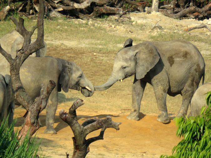 elefantes-vendidos1