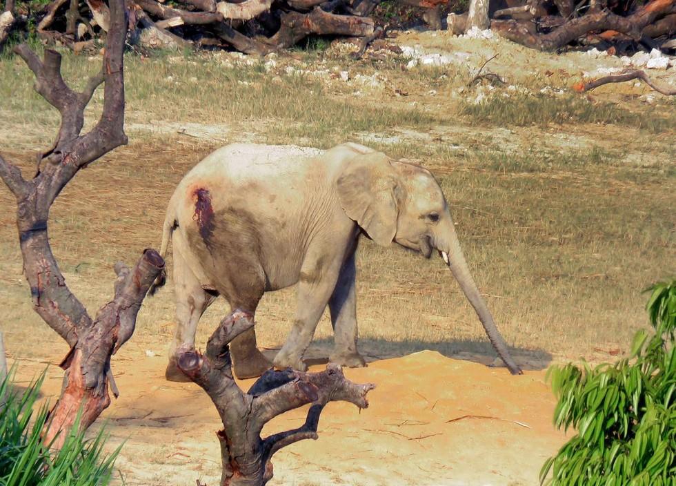 elefantes-vendidos2