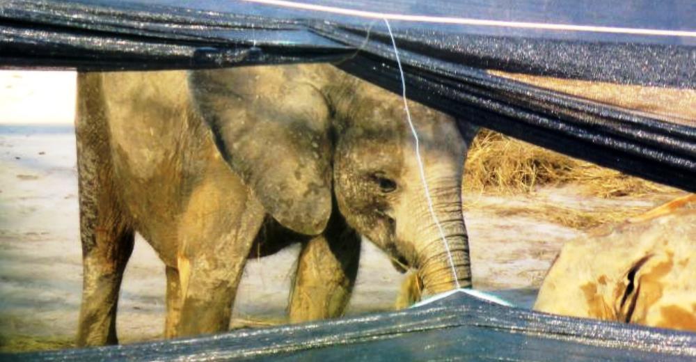 elefantes-vendidos4