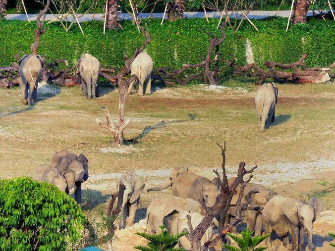 elefantes-vendidos5