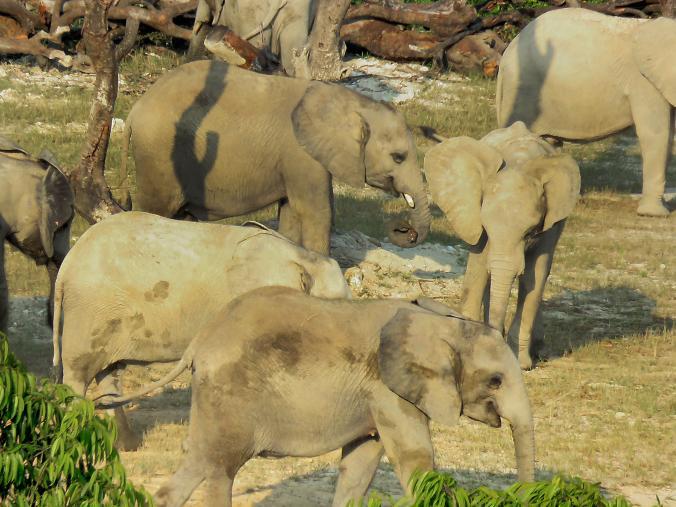 elefantes-vendidos6