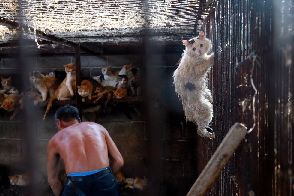 festival-china-gatos1