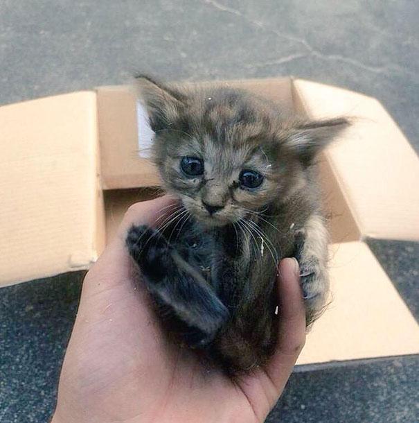 gatito-rescatado1