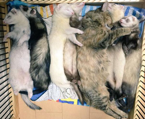 gatito-rescatado10