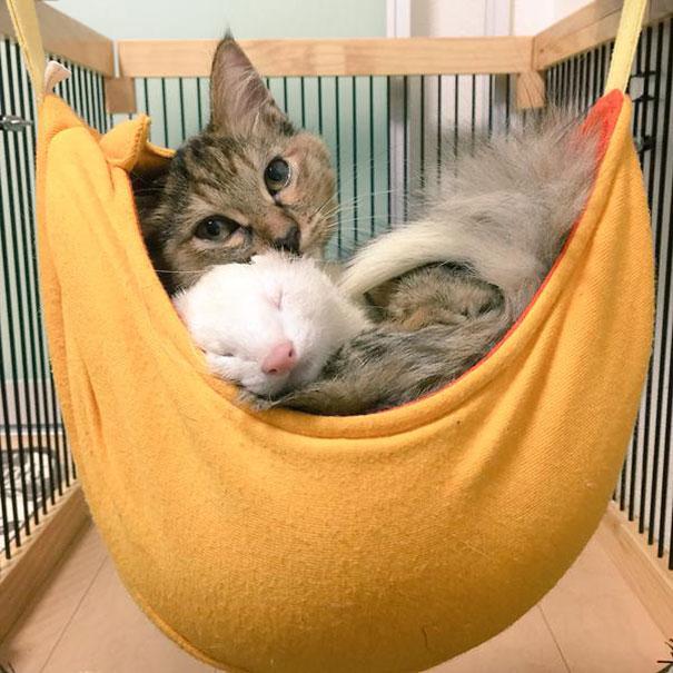gatito-rescatado12
